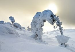 """Снегоходный тур в Национальном Парке """"Паанаярви"""""""