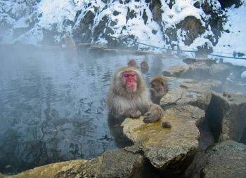 Хонсю и Окинава. Из зимы в лето (разведка)