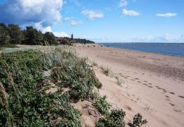 Очарование Комарово - прогулка экотропой к заливу и Щучьему озеру