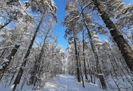 Зимние приключения на Красном Озере. Биатлон и лесная прогулка к старинным погребам