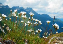 Цветущие склоны Архыза